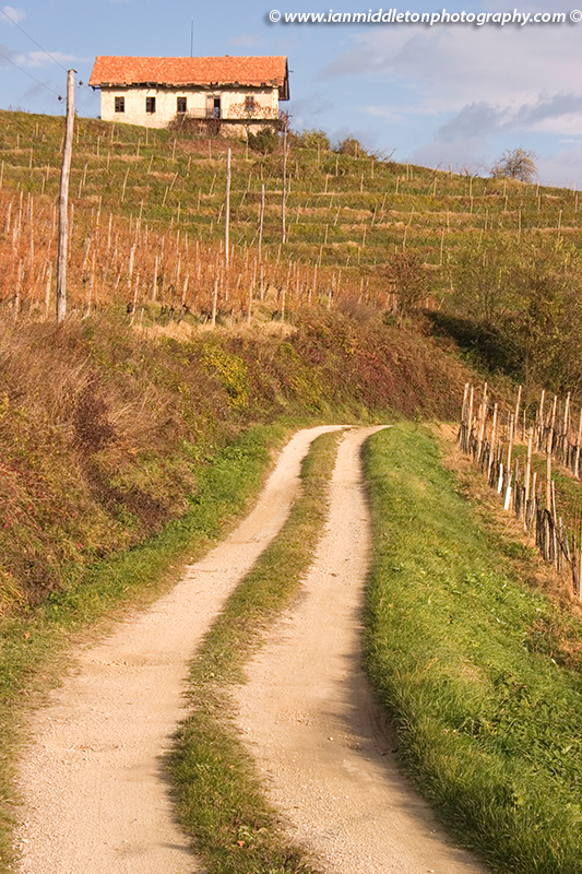 Cycling routes through vineyards near Brezice