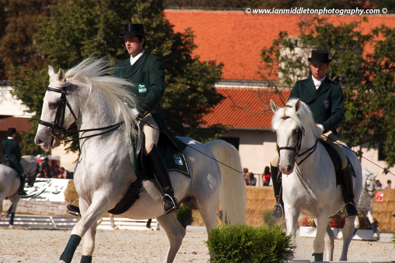 The world famous Lipizzaner horses.