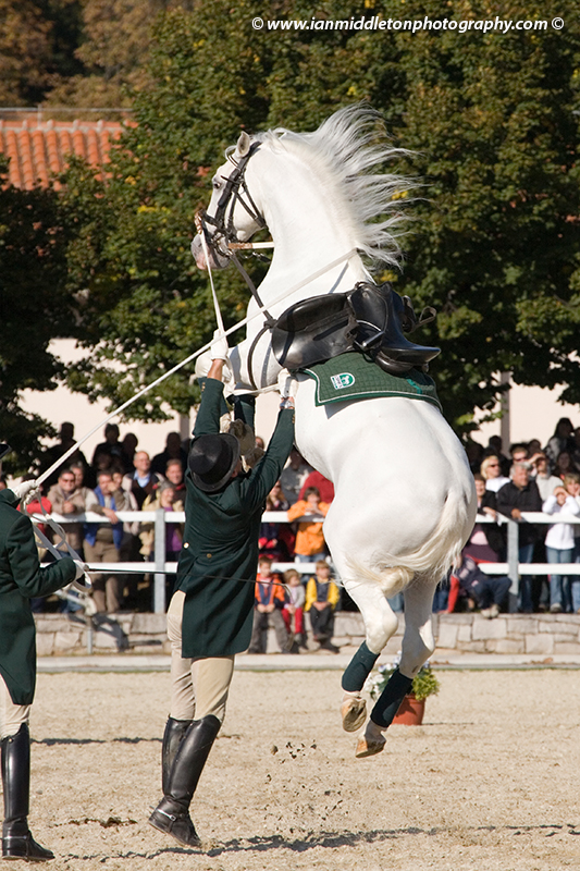 Jumping horses at Lipica open day, 2008, Slovenia. The world famous Lipizzaner horses in Slovenia. The Lipica stud farm opens its doors to the public for free once a year and puts on a show for all to see.